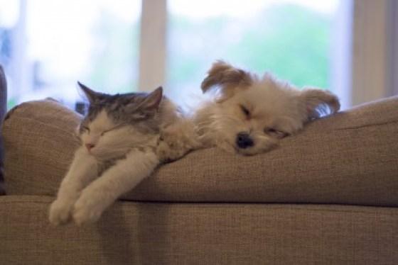 Sleeping-Cat-and-Dog