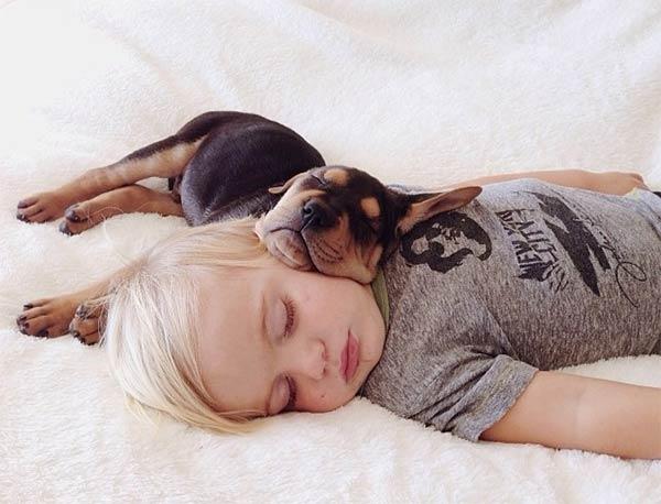 Sleeping dog and child 1