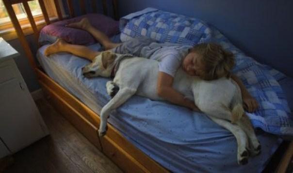 Sleeping dog and child 3