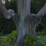 the-15-craziest-things-in-nature-you-wont-believe-actually-exist-11-2