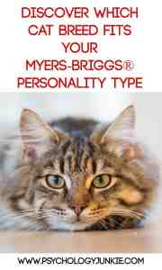 Find out which cat breed matches your Myers-Briggs® personality type!