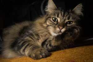 INTJ cat