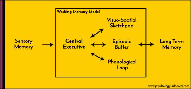 Working Memory Model Diagram