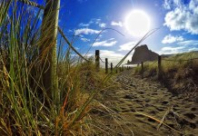 Piha: We did take a day trip to the Western beaches in Auckland!