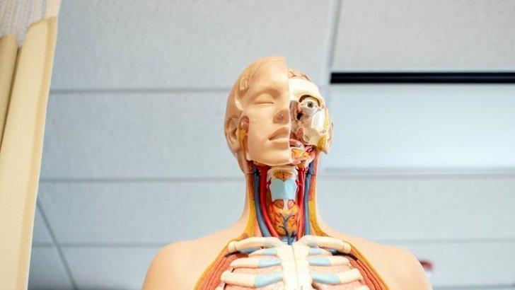 New AI App Successfully Decreases Symptoms of COPD
