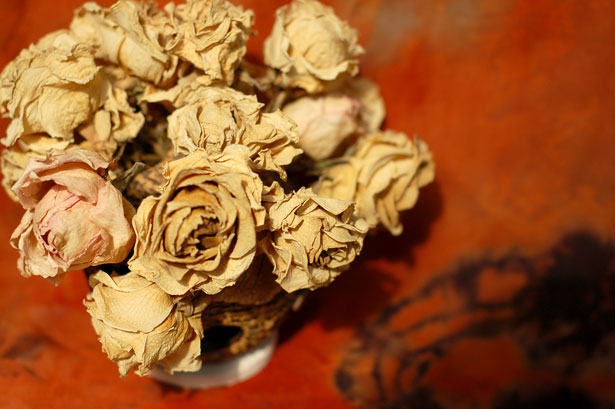 Dried Roses Free Stock Photo Public Domain Pictures