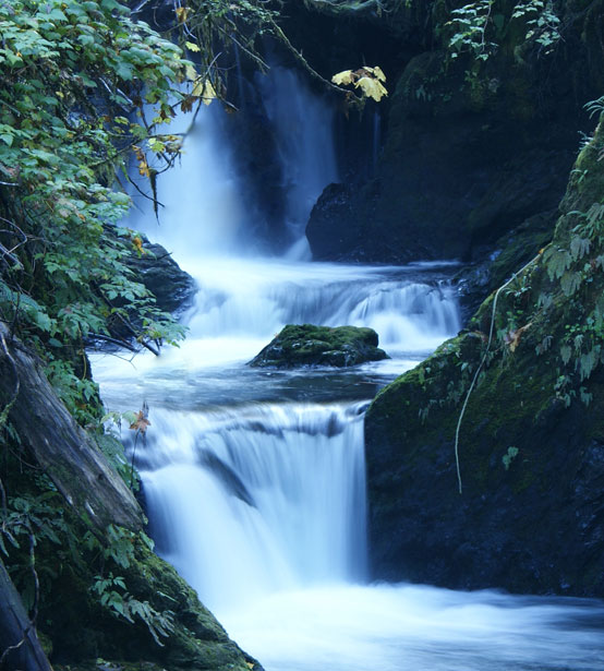 Quinault Wasserfall