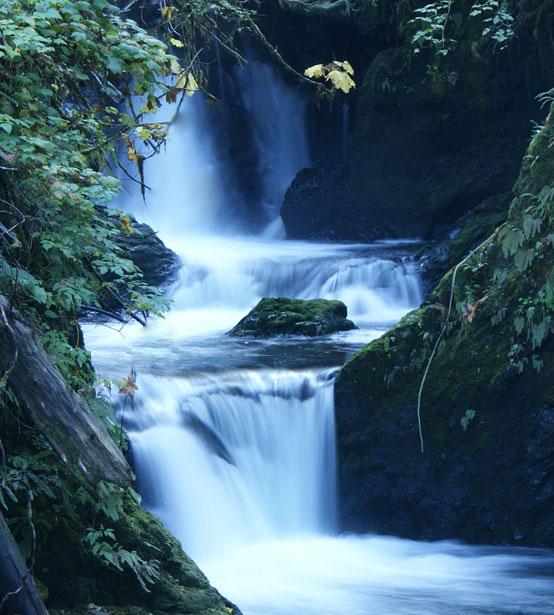 Quinault Wasserfall