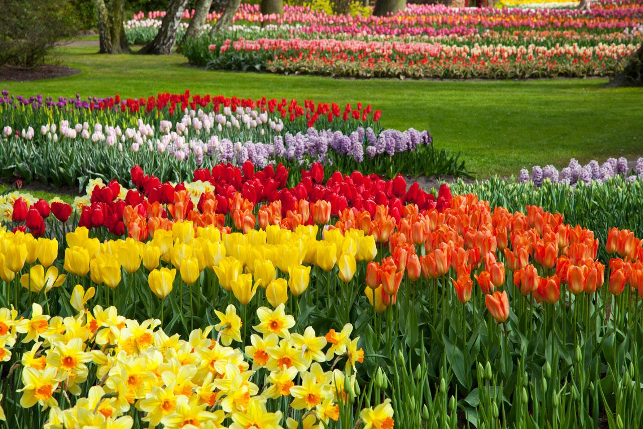 National Garden Month, Planting, Gardens
