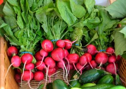 radish Easy Plants to Grow