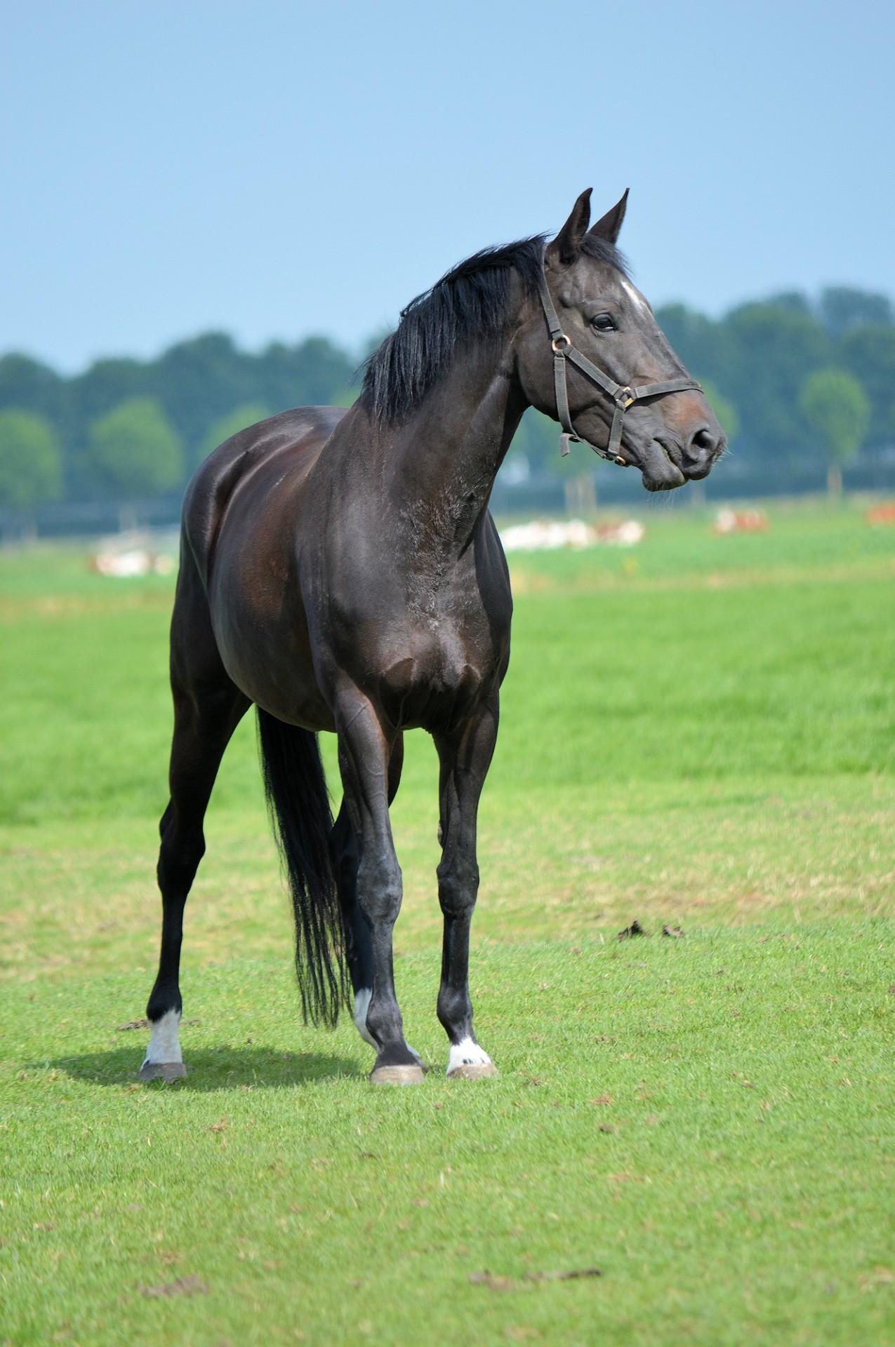 black horse free stock photo - public domain pictures