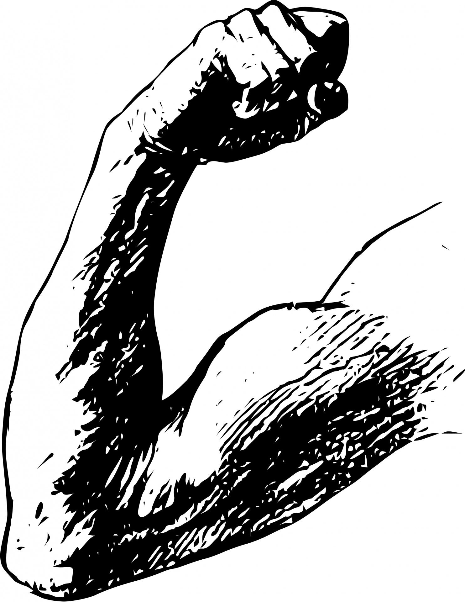 arm muscle flex free stock photo public domain pictures