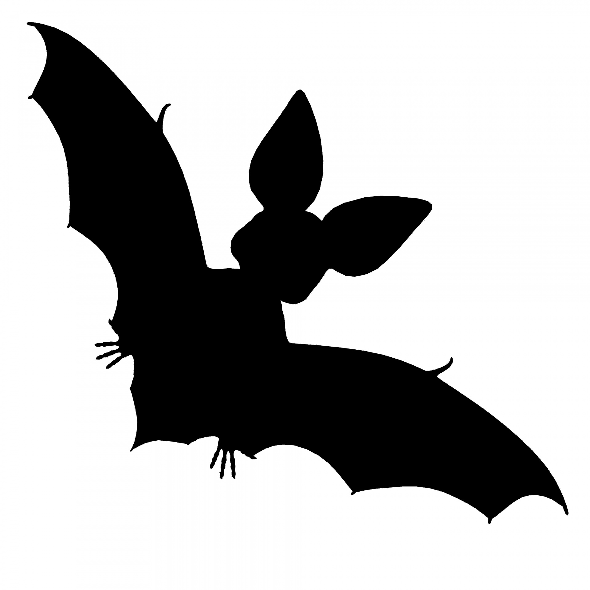 Black Bat Free Stock Photo