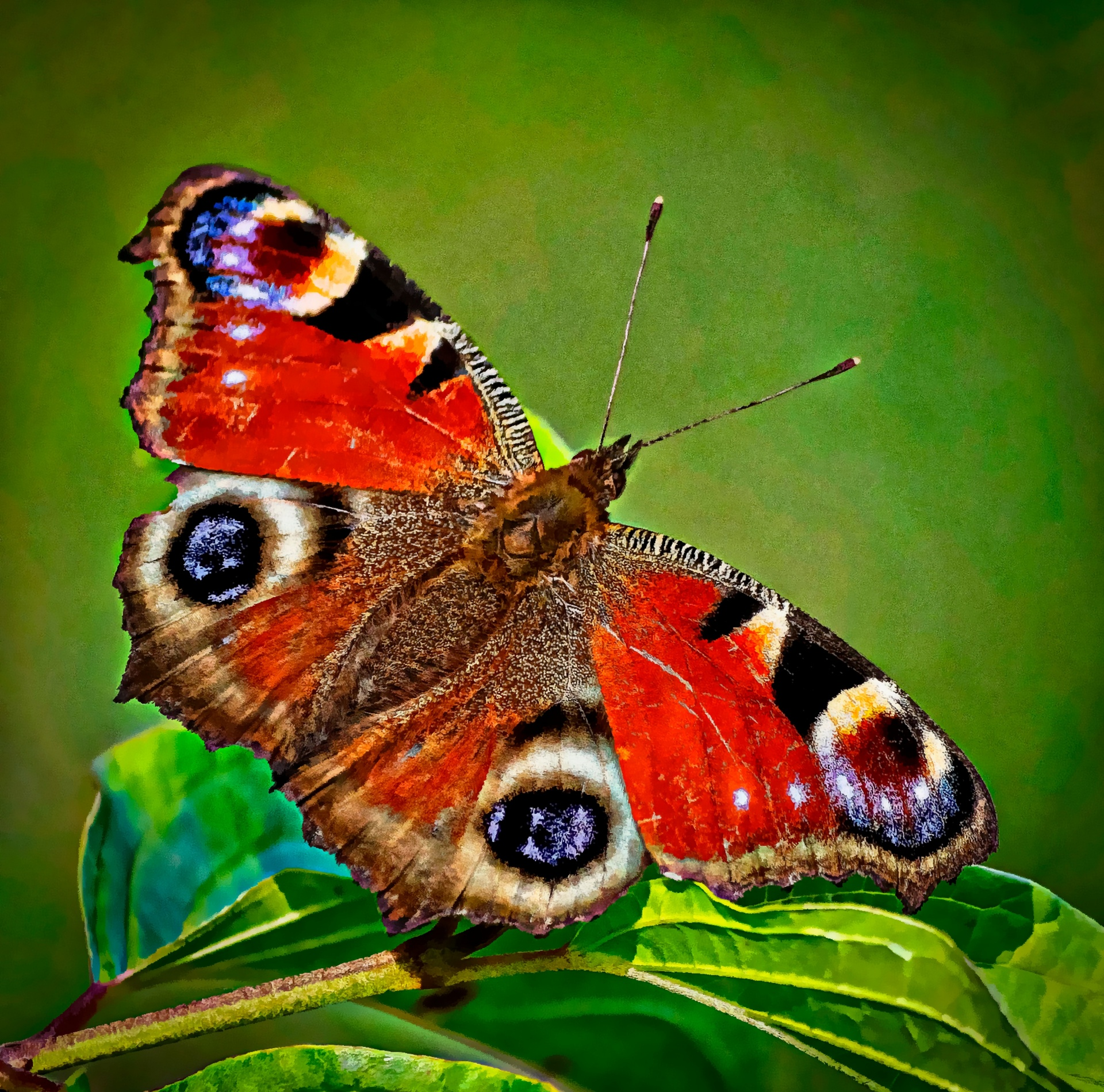 Butterfly Painting Free Stock Photo