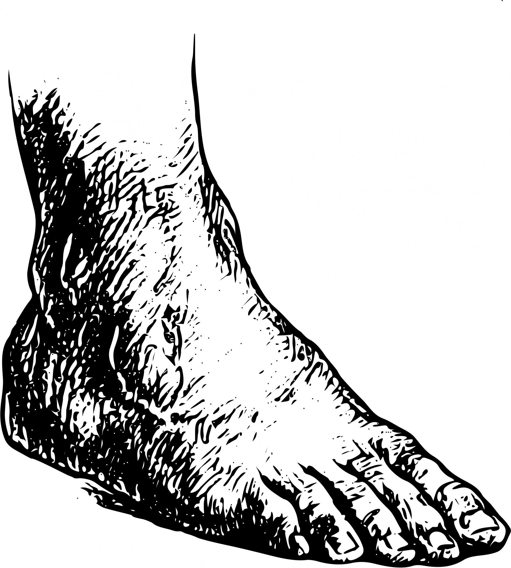 Human Foot Free Stock Photo