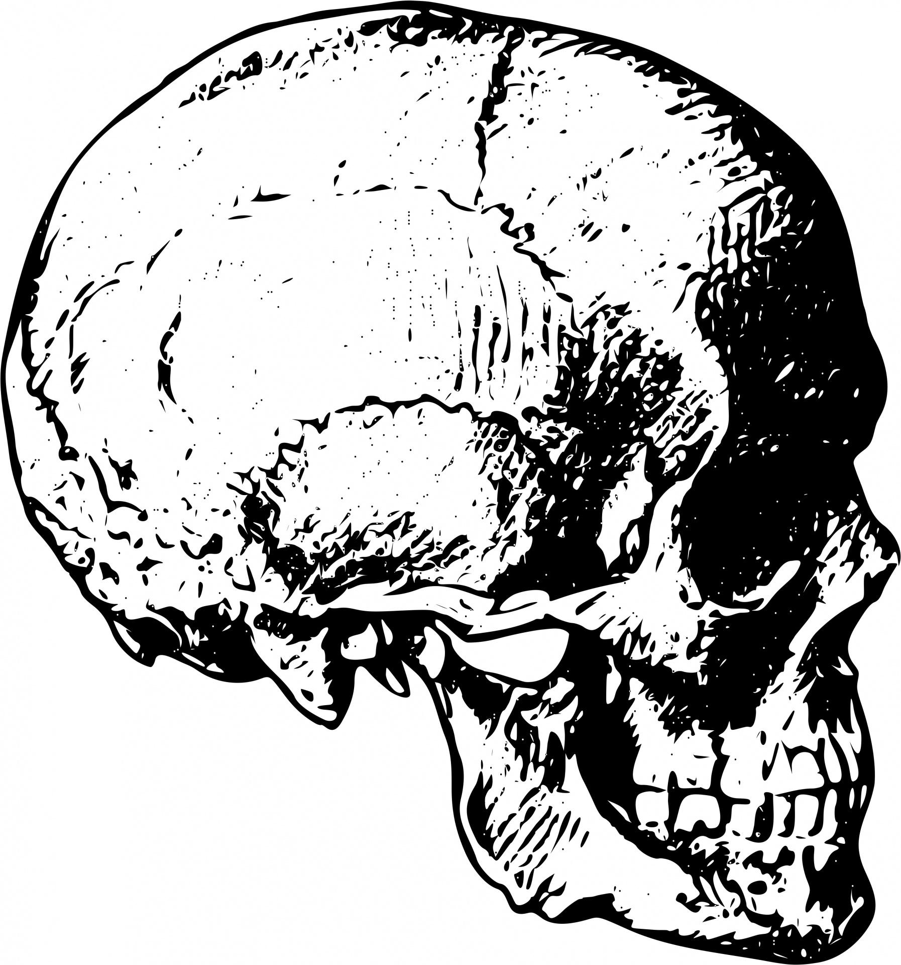 Human Skull Free Stock Photo