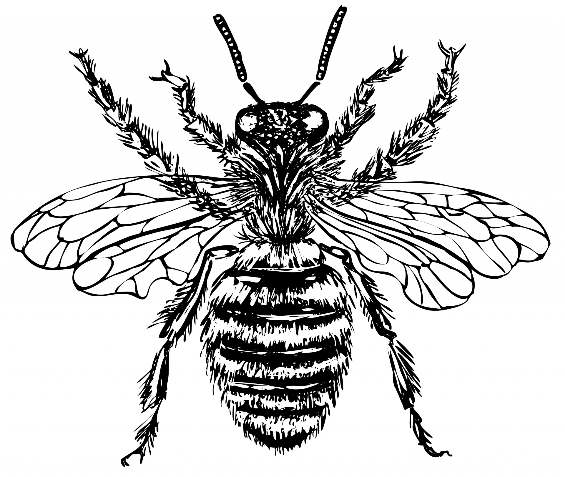Bee Illustration Clipart Free Stock Photo