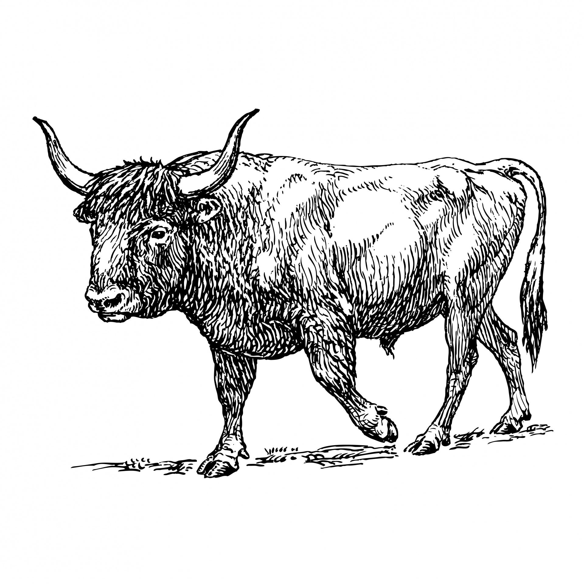 Ox Clipart Illustration Free Stock Photo