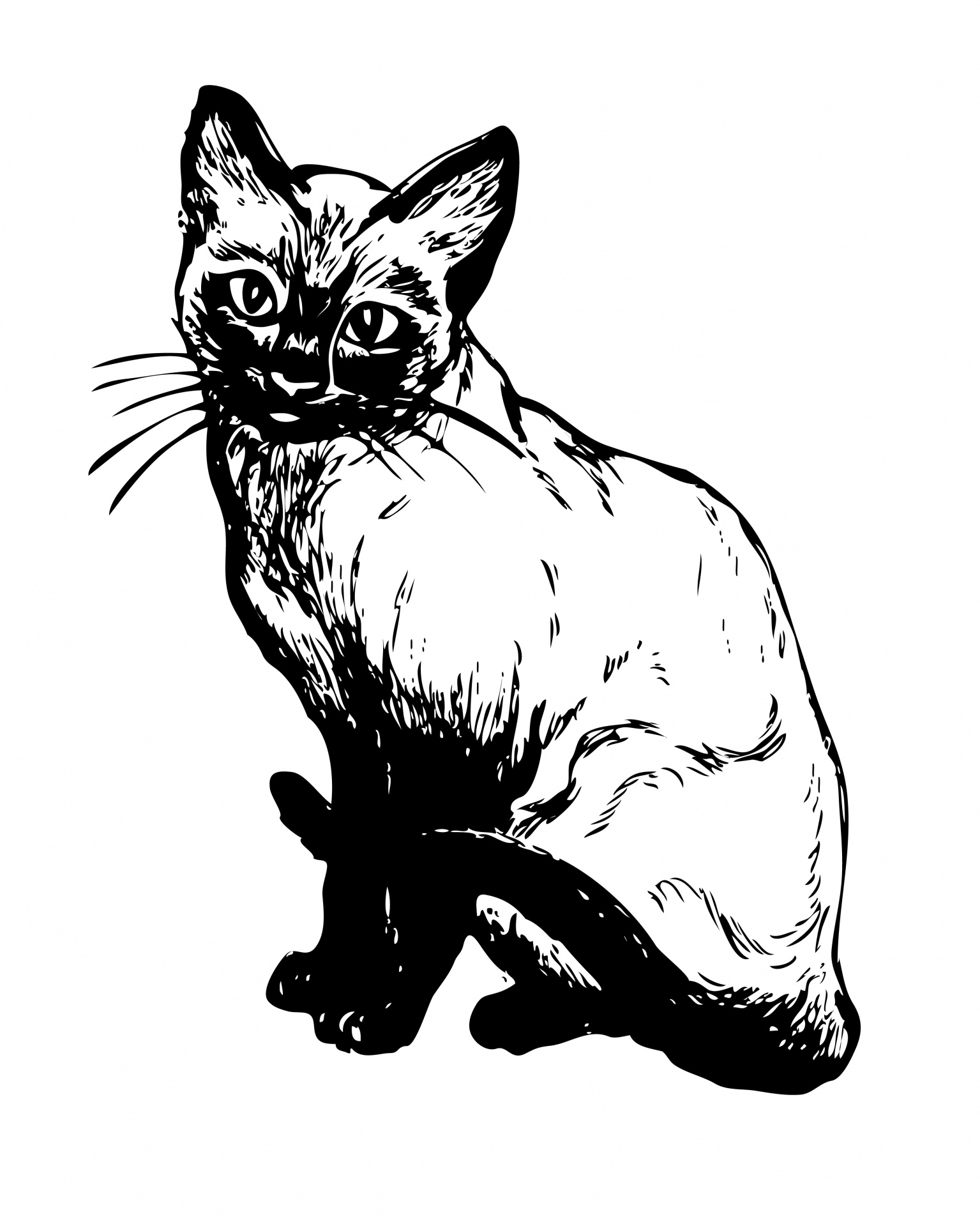 Siamese Cat Illustration Clipart Free Stock Photo
