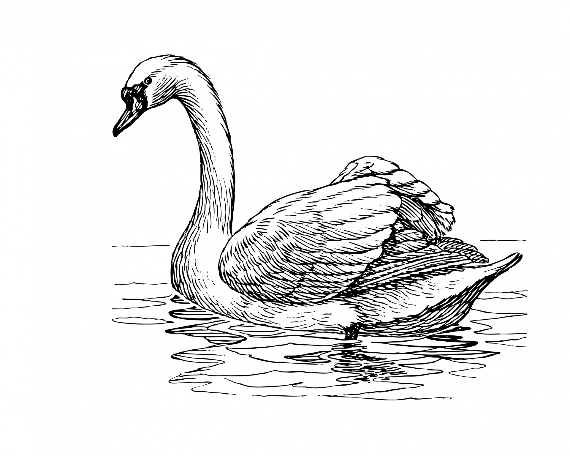 Swan Clipart Illustration Free Stock Photo
