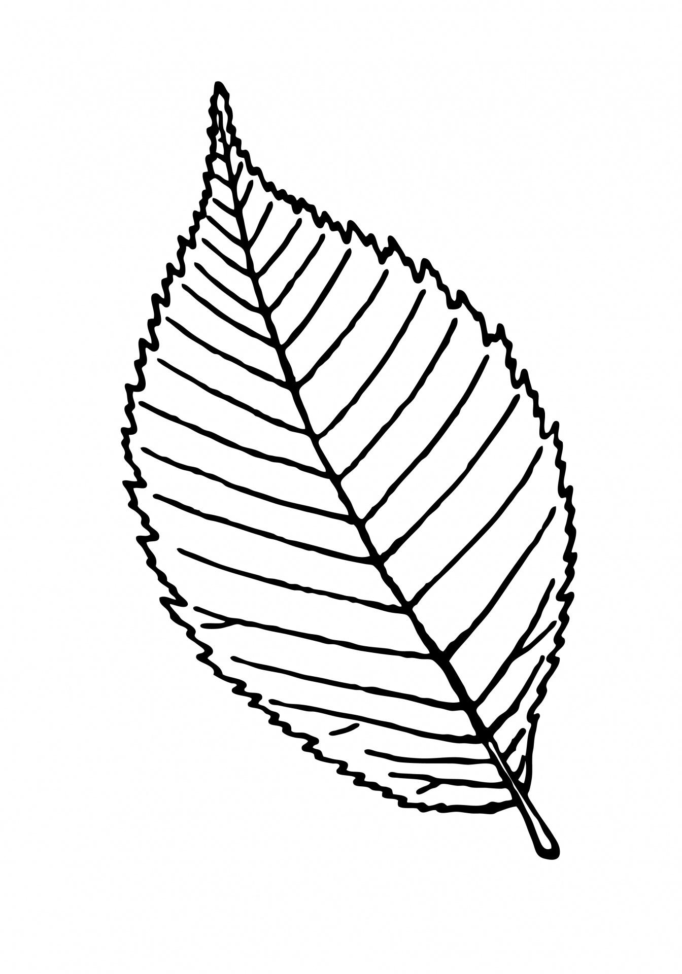 Leaf Outline Clipart Illustration Free Stock Photo