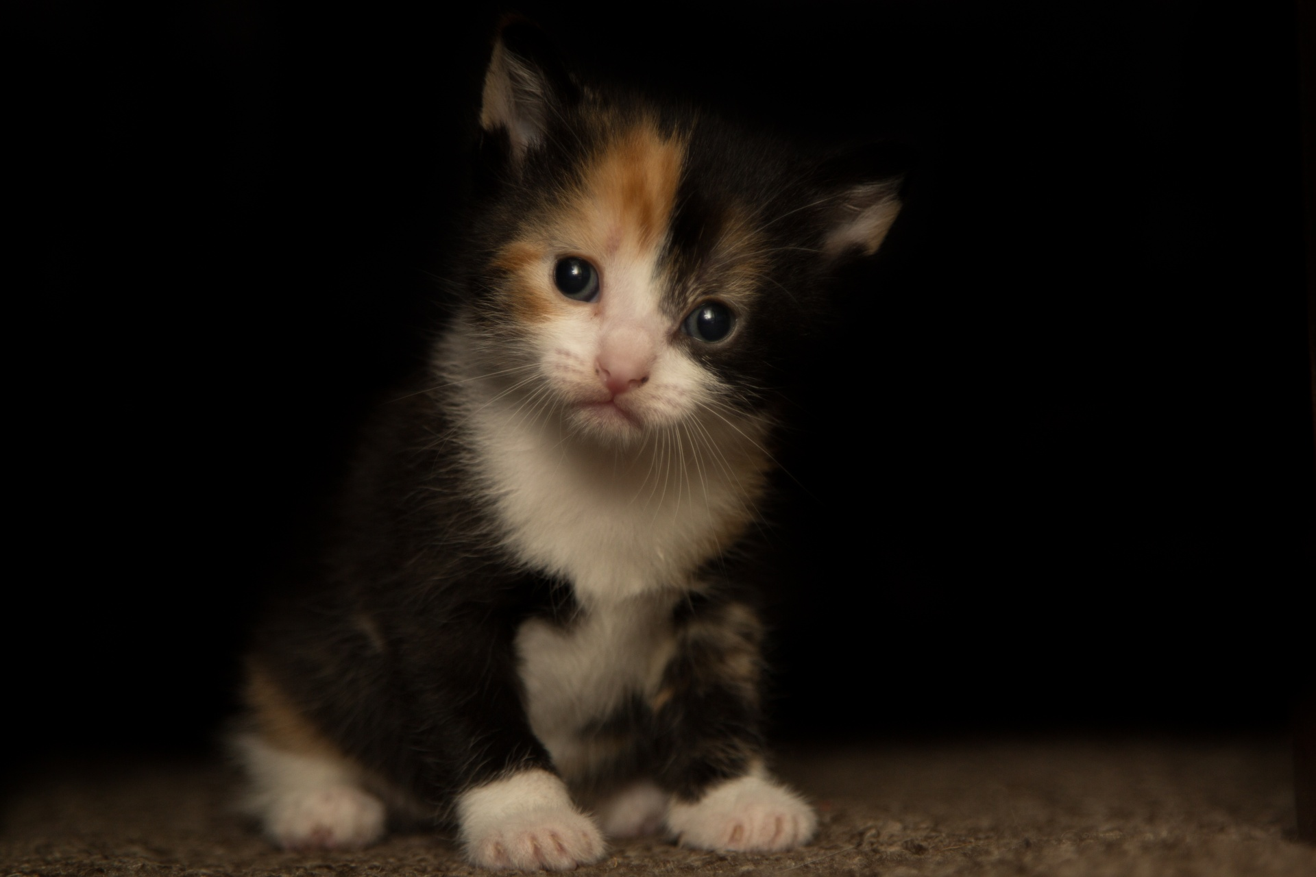 Beautiful Cat Free Stock Photo Public Domain Pictures