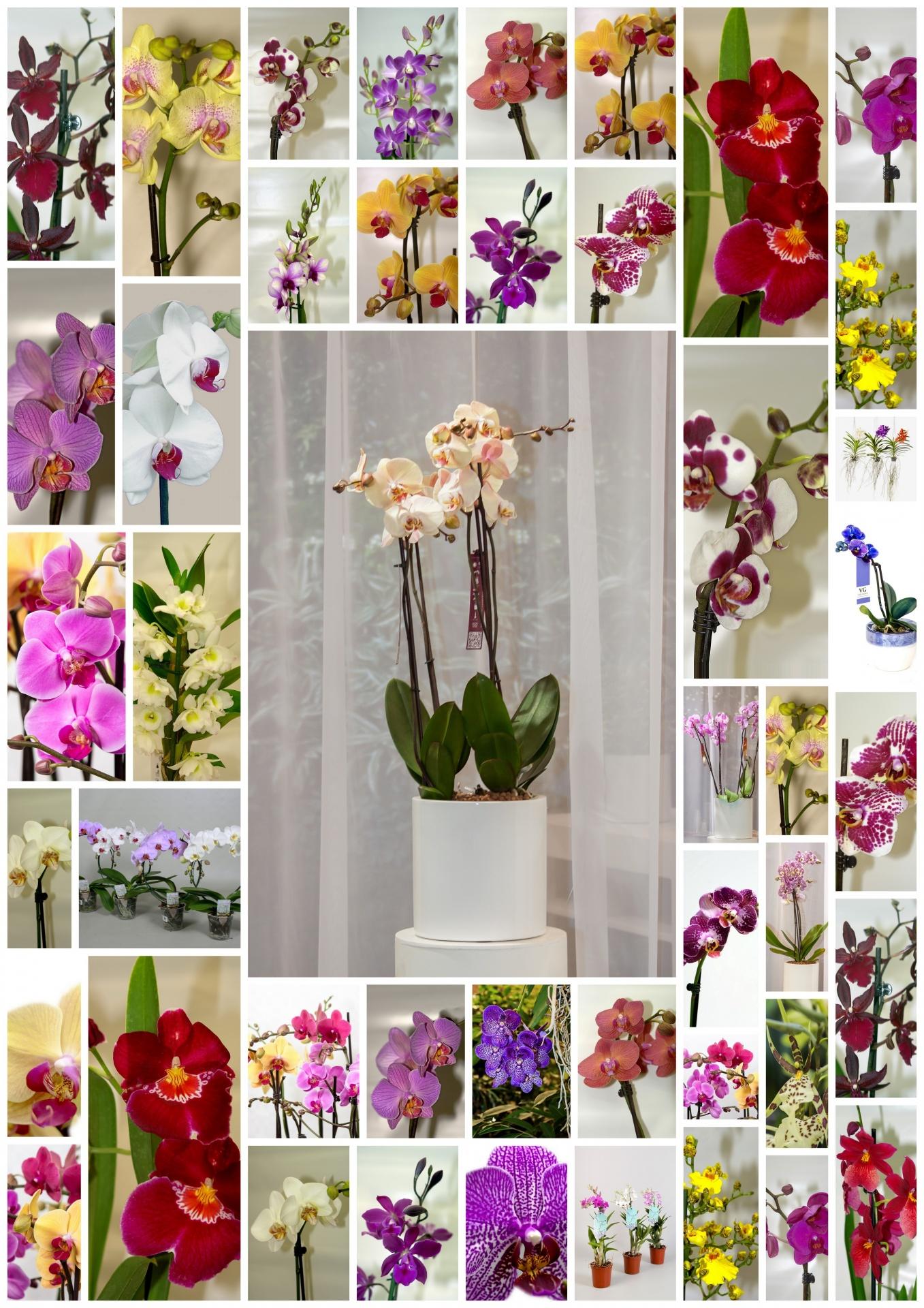 Orchids, diversity, Flowers