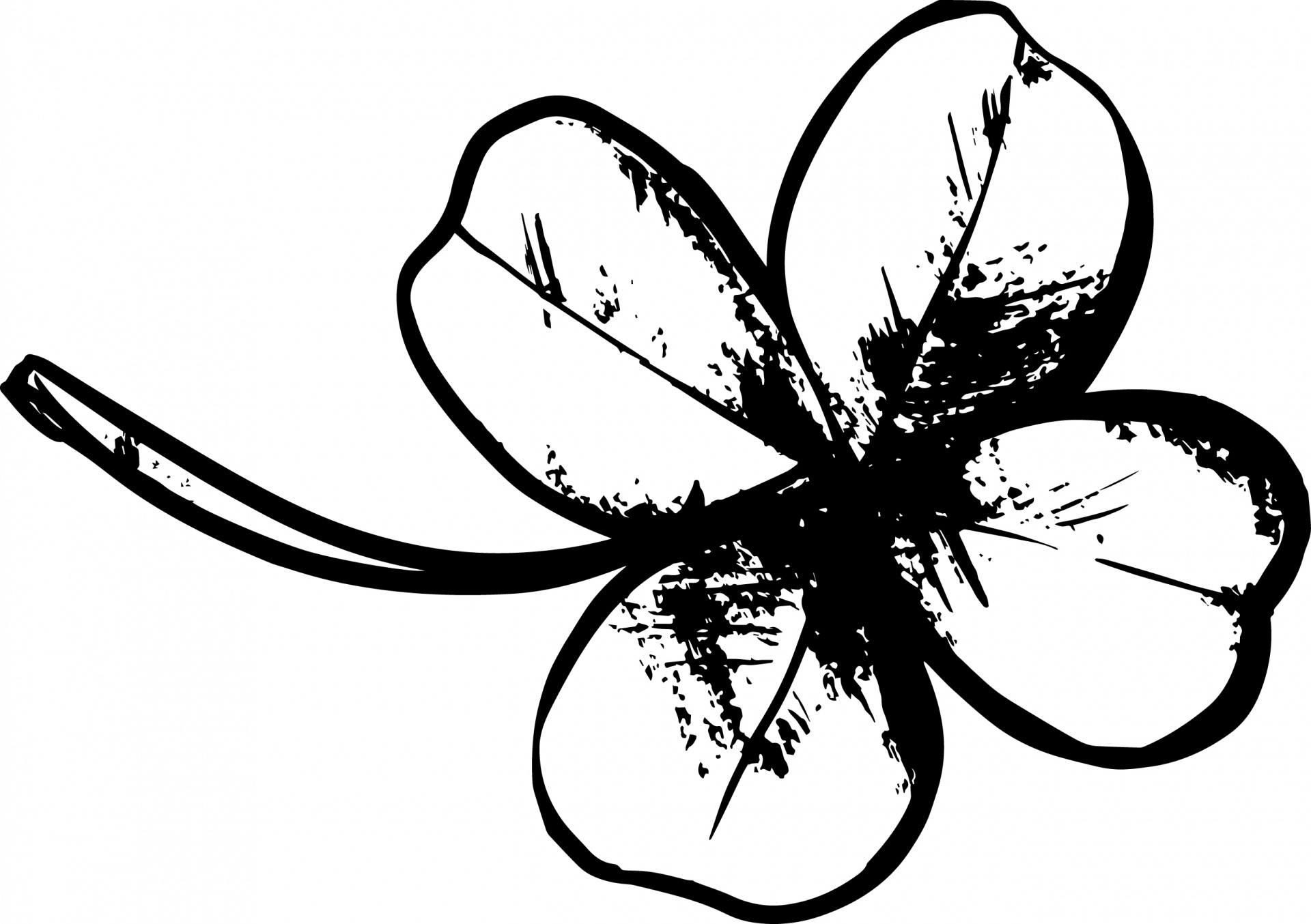 Four Leaf Clover Drawing Free Stock Photo