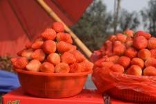 Pick Strawberries Day, Strawberries