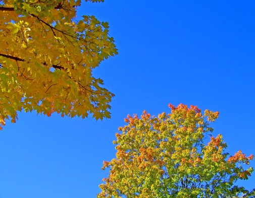 Image result for autumn sky
