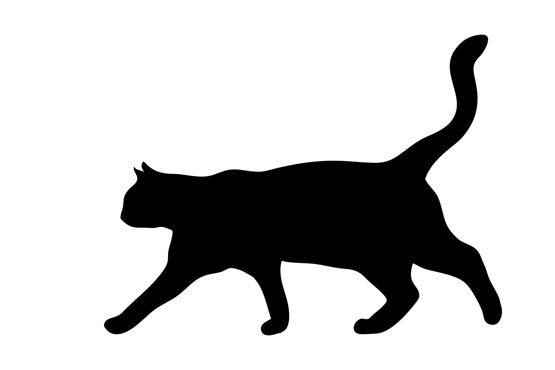Cat Walking Black Silhouette Free Stock Photo Public