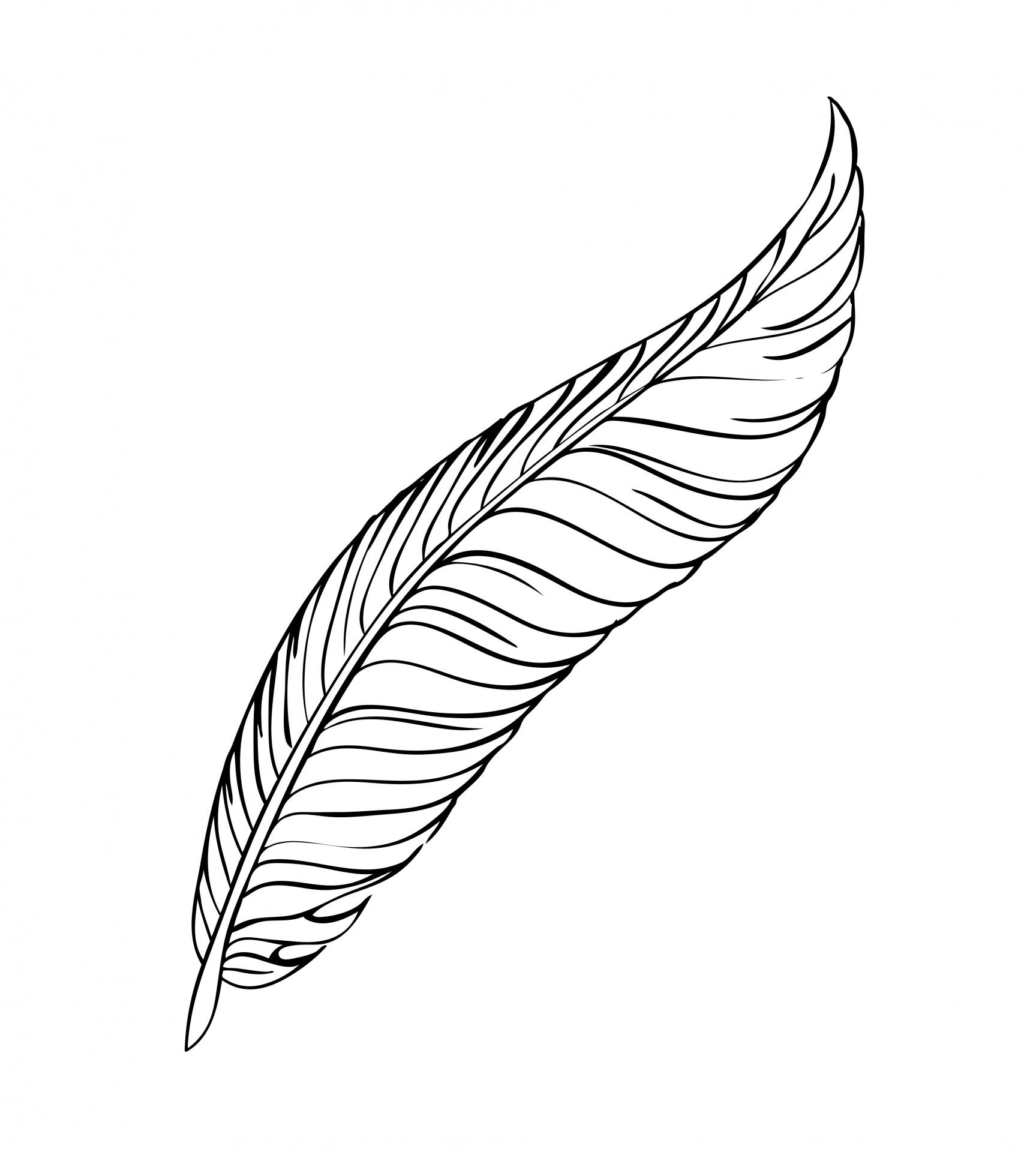 Feather Line Art Free Stock Photo