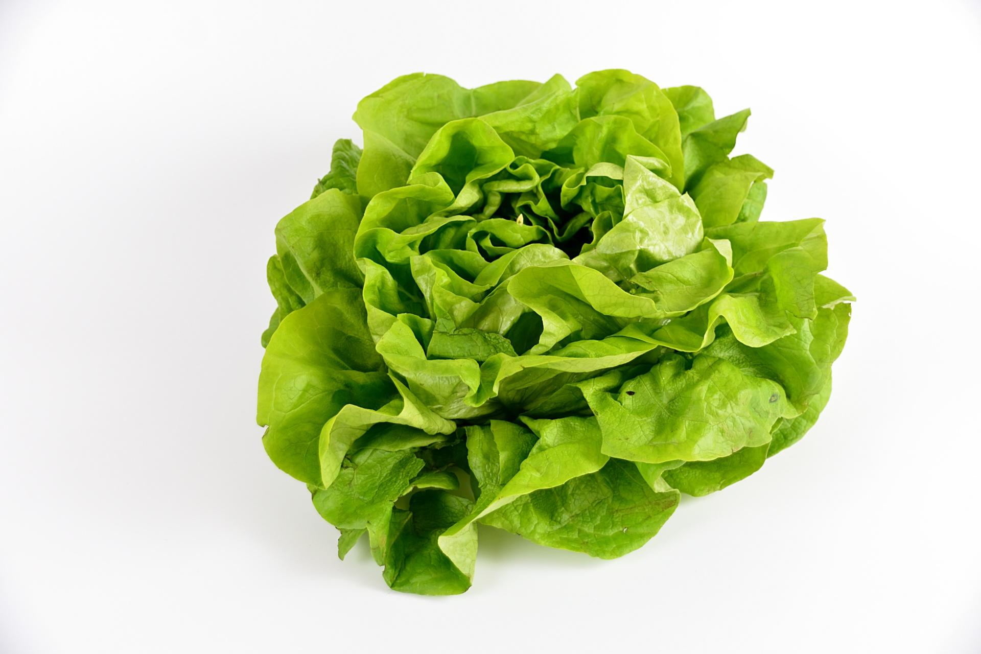 """Résultat de recherche d'images pour """"salade verte"""""""
