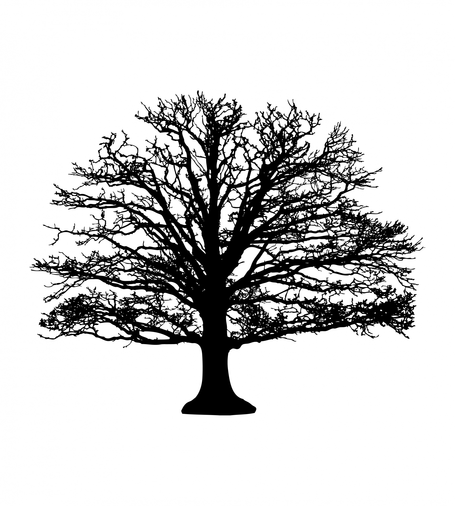 Tree Silhouette Free Stock Photo