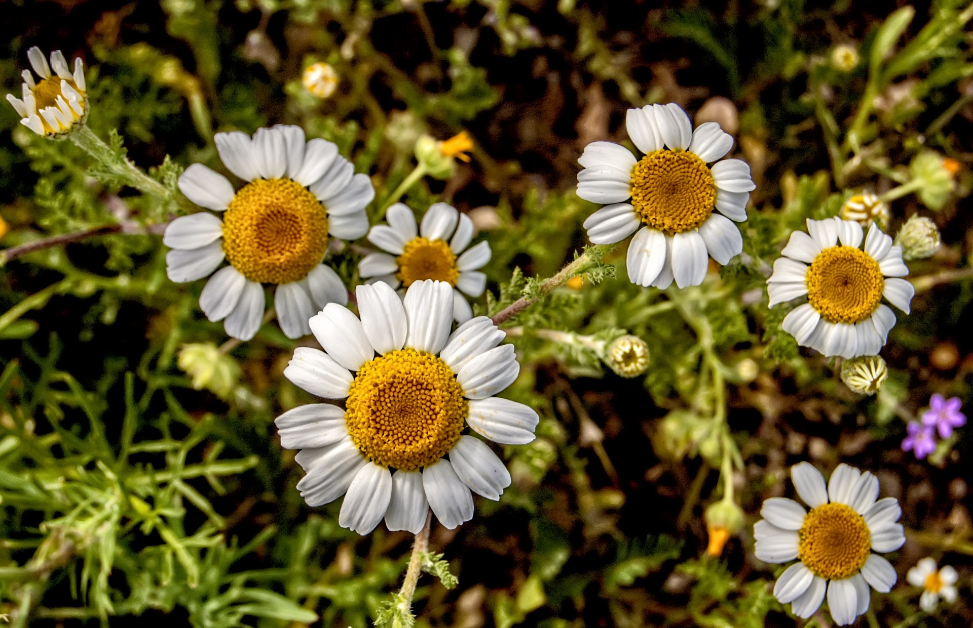 Wild daisies every flower blooms in its own time image result for wild daisies izmirmasajfo