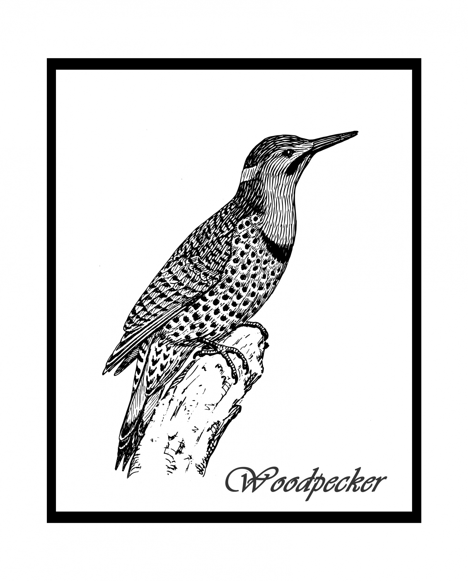 Woodpecker Illustration Free Stock Photo