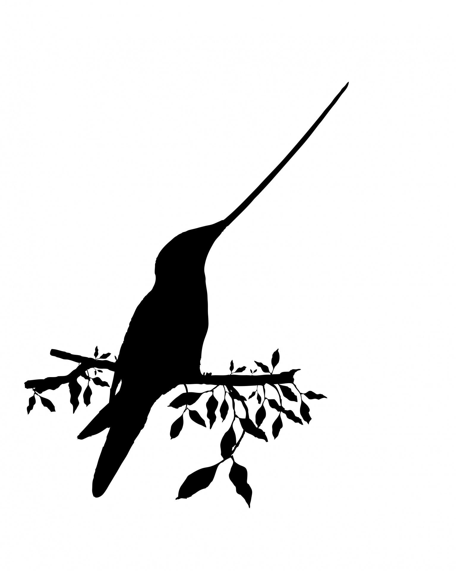 Bird Silhouette Hummingbird Free Stock Photo
