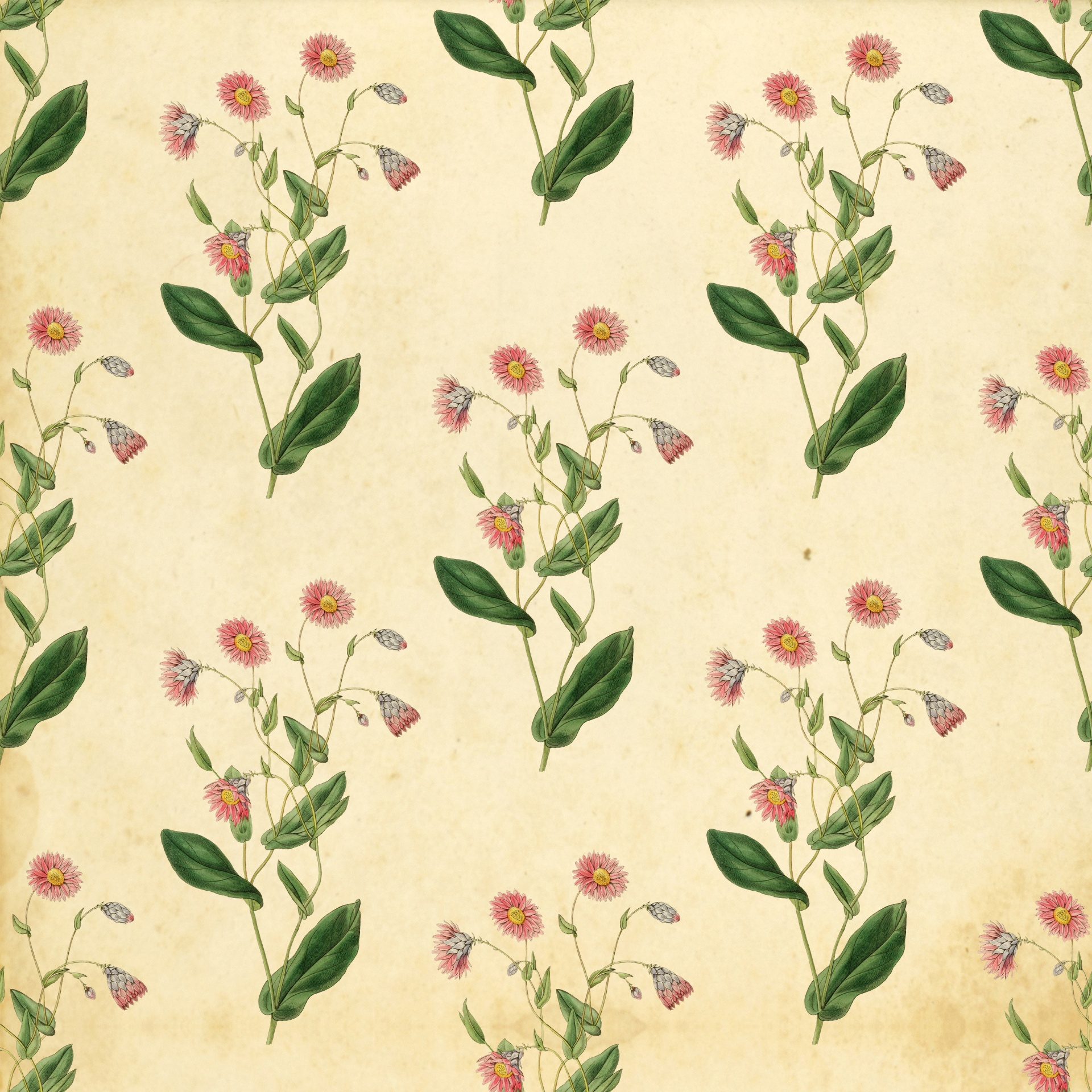 Floral Vintage Wallpaper Background Free Stock Photo Public Domain Pictures