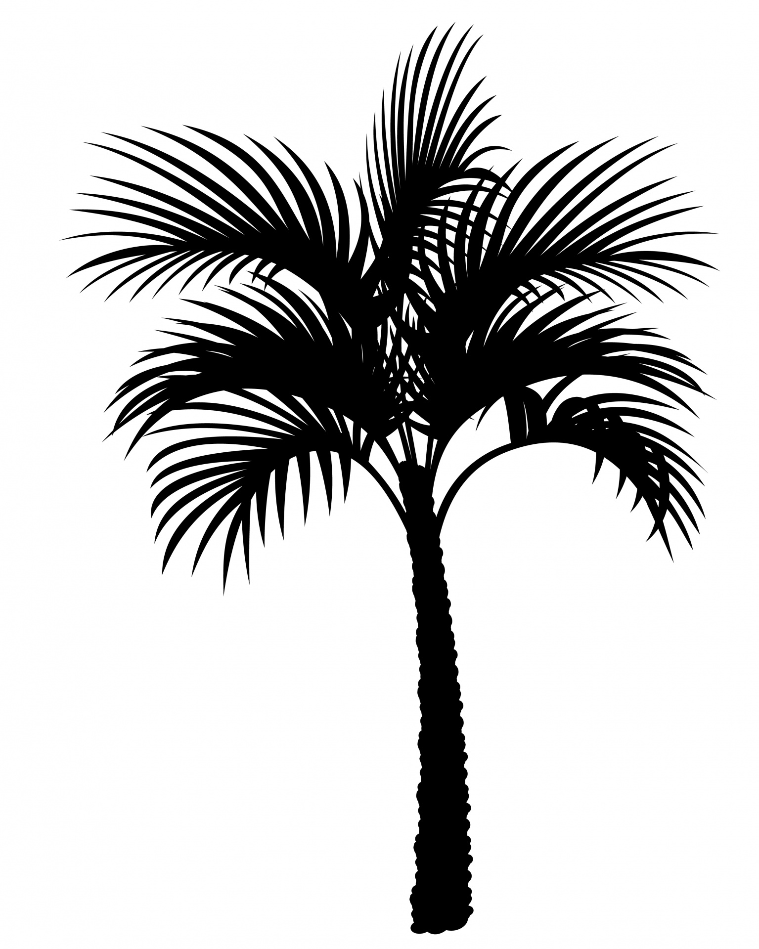 Palm Tree Silhouette Clipart Free Stock Photo