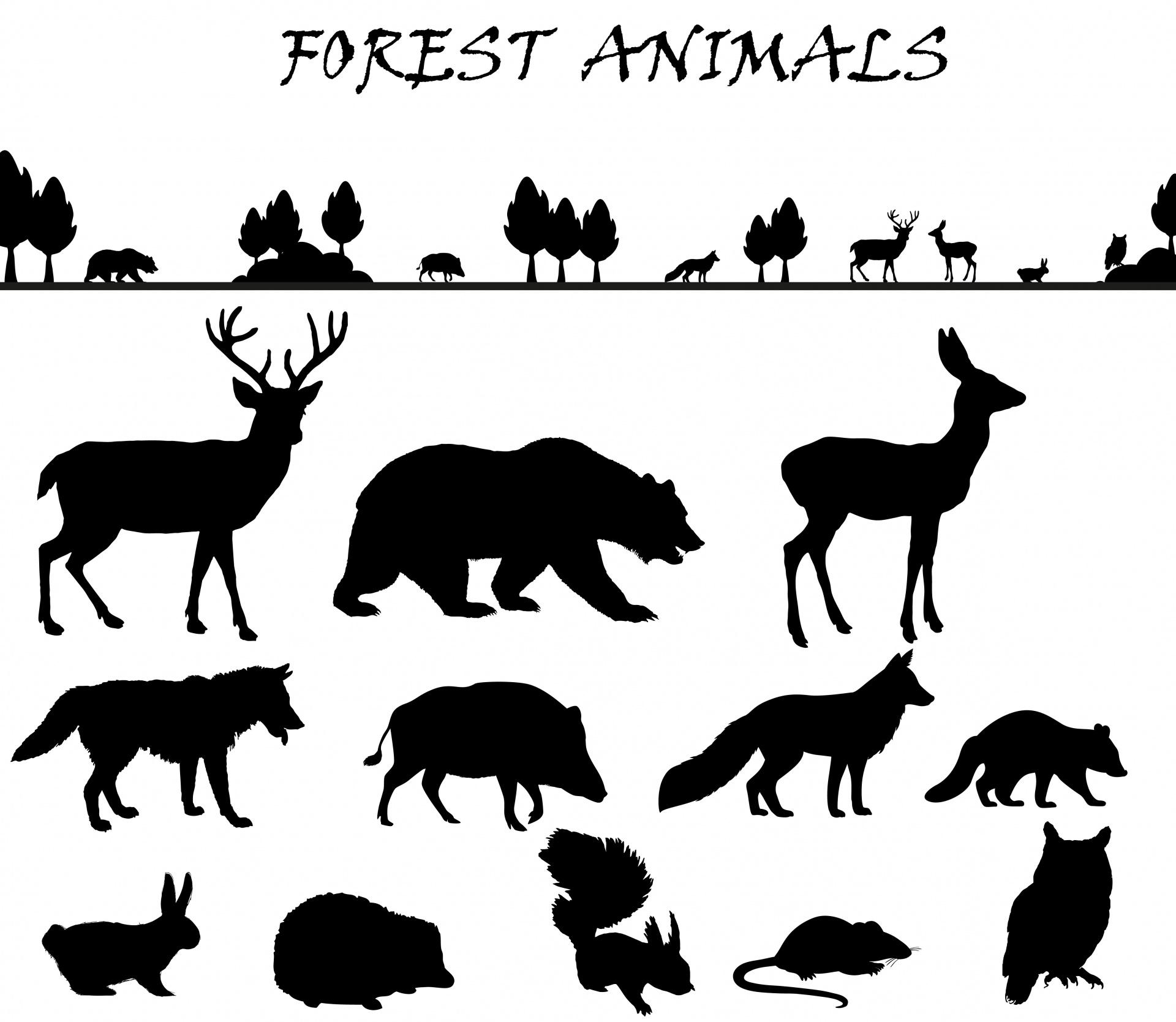 Set Di Sagoma Di Animali Della Foresta Immagine Gratis