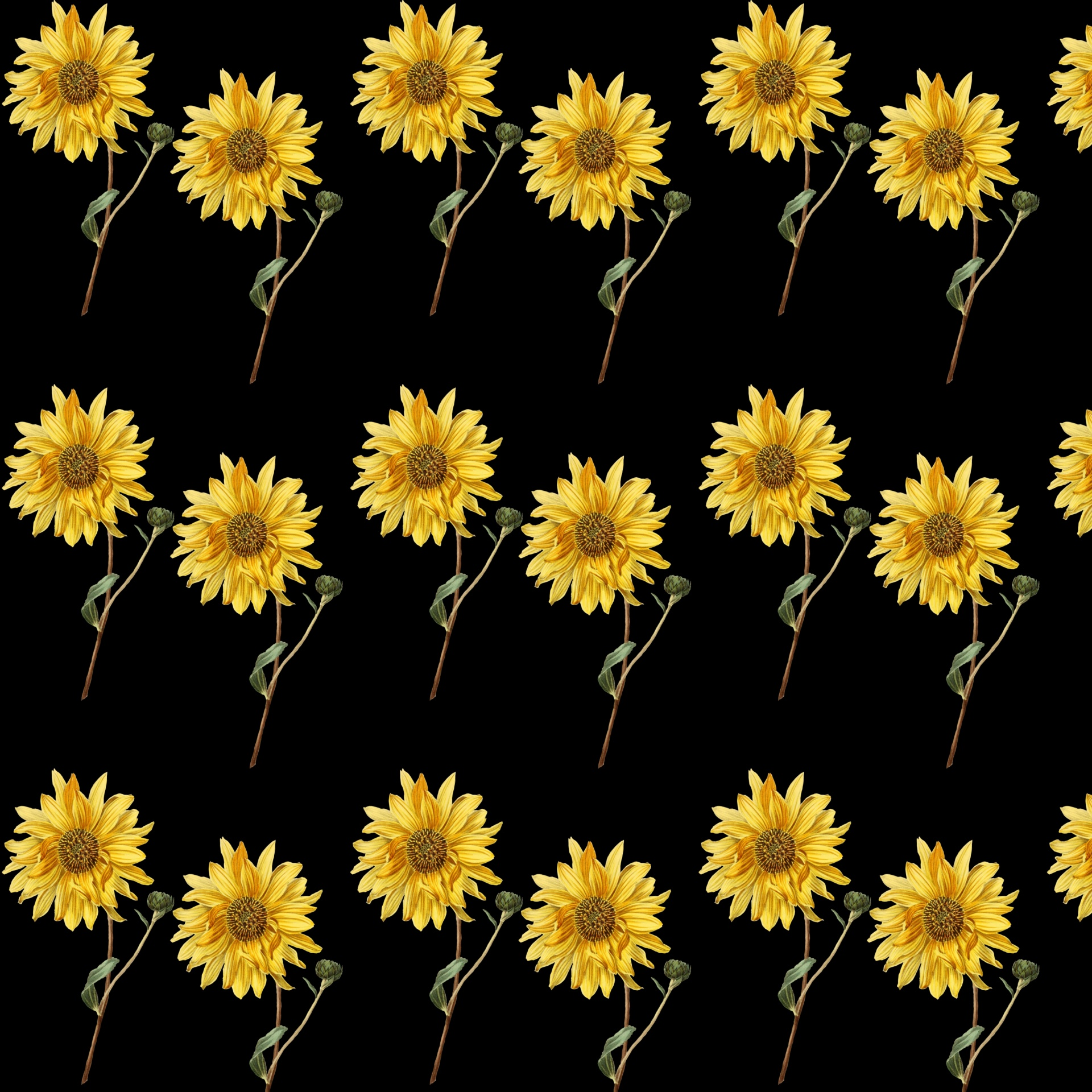 Sunflower Wallpaper Background Free Stock Photo Public Domain Pictures