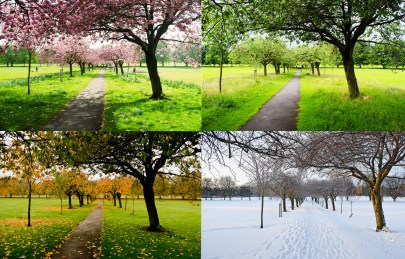 Image result for four seasons