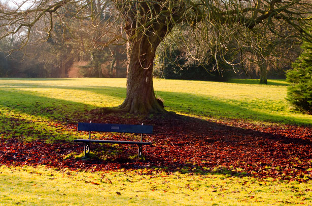Bench Under A Tree Free Stock Photo Public Domain Pictures