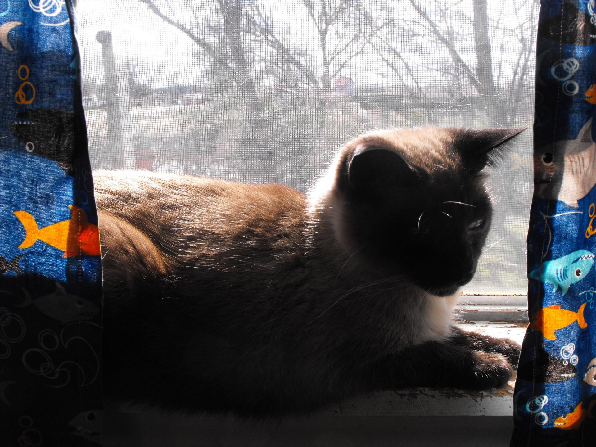 poetry, cat, window, Limerick