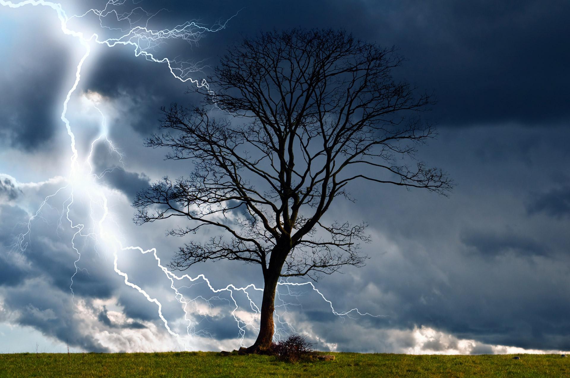 tree storm image