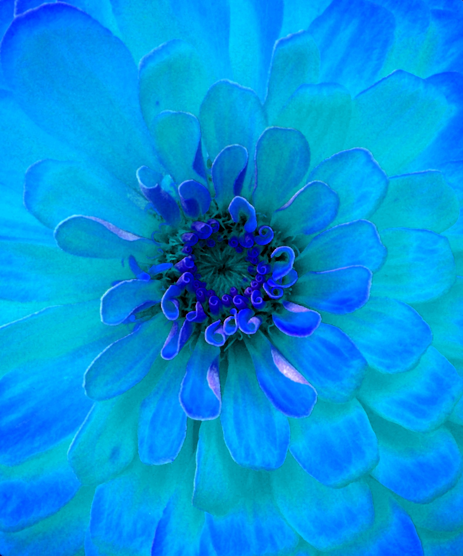 Painting Of A Turquoise Flower Free Stock Photo   Public Domain Pictures Painting Of A Turquoise Flower