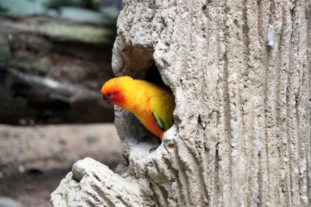 A Yellow Parrot Rest On The Nest