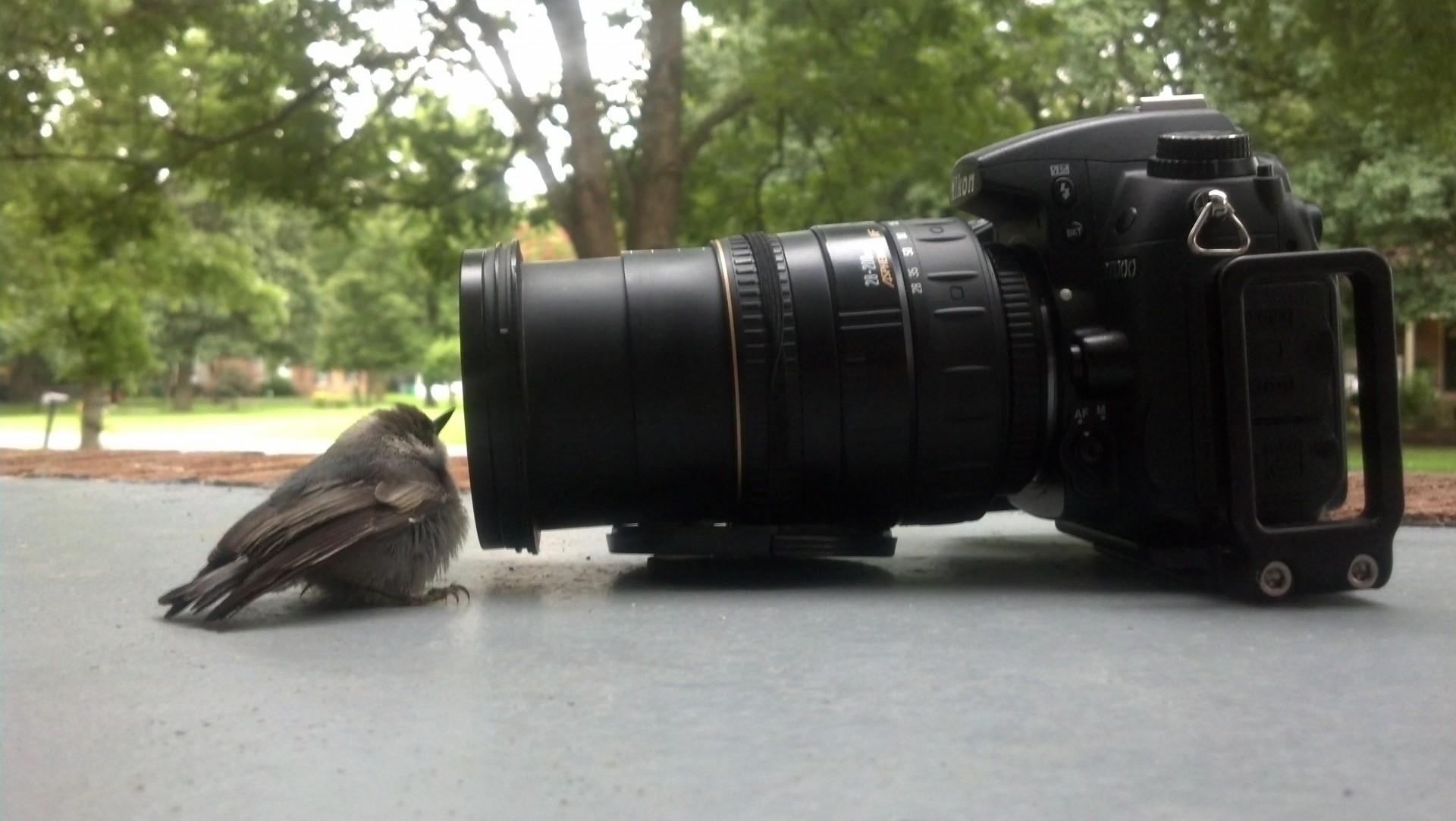 Bird Watching, Camera