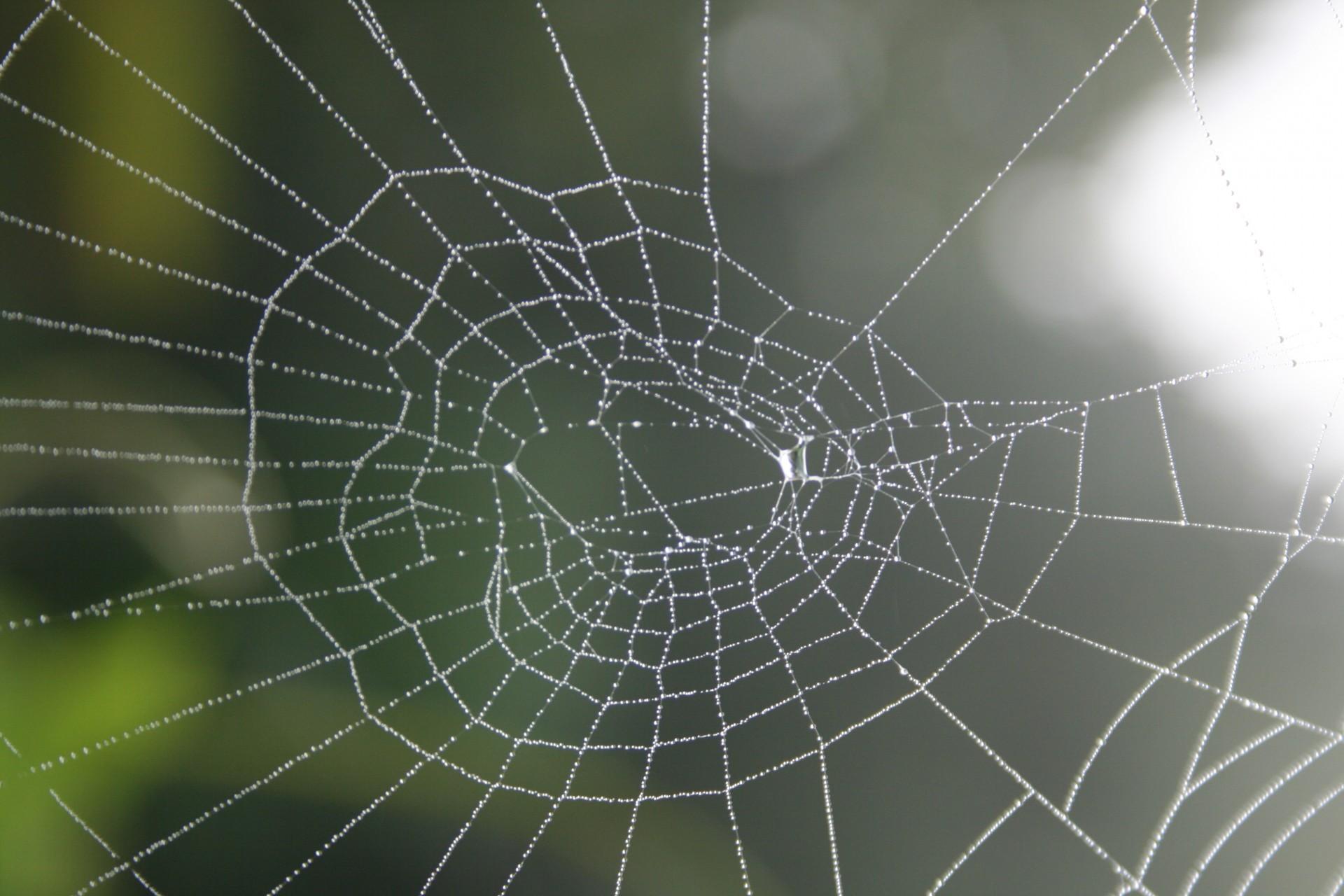 spiderweb, nature