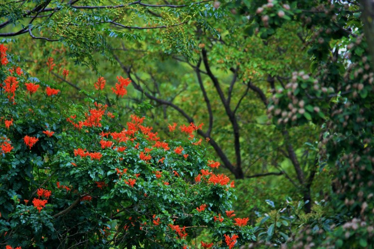 Znalezione obrazy dla zapytania pnącza